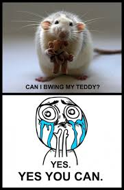Teddy Meme - can i bring my teddy cuteness overload know your meme