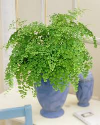 plants that don t need sunlight to grow plants that grow without sunlight 17 best plants to grow indoors