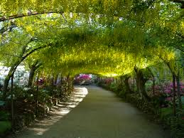 Garden by File Laburnum Arch Bodnant Garden Jpg Wikimedia Commons