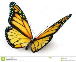 butterfly stock illustration illustration of insect 35139513