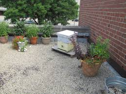 a deep dive into a milwaukee rooftop apiary wuwm