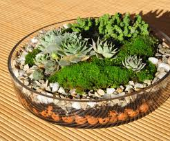 terrarium coffee table centerpiece on big round glass vase for outdoor display jpg