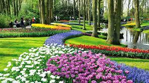 keukenhof garden is a huge flower garden was once the world u0027s