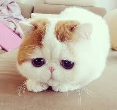 Sad Kitty Meme - pourquoi les cheveux longs c est quand même relou sad kitty sad