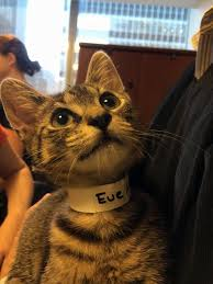 Aspca Meme - uber app delivers on demand kittens ny daily news
