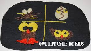 owl life cycle craft for kids archives wikki stix