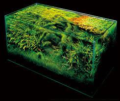 Aquascape Takashi Amano Aquascaping Visionary Takashi Amano Dies At Age 61 Marquee Lite