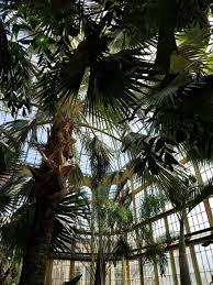 baltimore rawlings conservatory u2014 cityscape photo