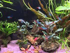 christmas tree moss live aquarium plant by miraclemoss on etsy
