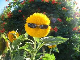 cute plant funny flower quotes and sayings sunflowers gardens and bonsai