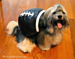 to dog with love help us decide on a halloween costume for rocco