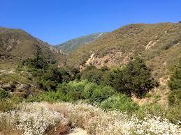 California vegetaion images Southern california john donoghue jpg