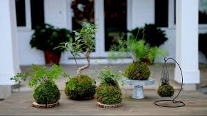 how to make kokedama full version garden answer youtube