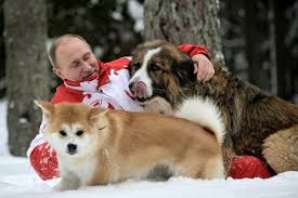 american eskimo dog in india japan tried to make friends with russia by giving putin a puppy