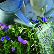 garden design garden design with how much and when to water the