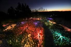 landscape arboretum hosts colorful winter light show