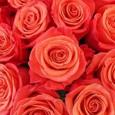 bulk roses 75 s day roses secret of flowers