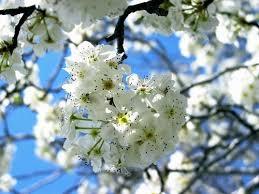 *•~-.¸¸,.-~*زهور اسلاميه*•~-.¸¸,.-~* images?q=tbn:ANd9GcTVKvoYxFFozqcIYjx_W73OFcsBh0nbmMN4ZyT4SEd_nUEgdOCESA