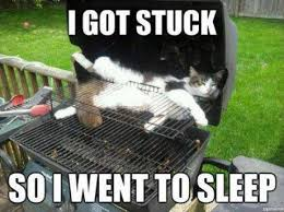 Meme Sleepy - sleepy kitty cooked kitty yum yum yum meme by tantebasil memedroid