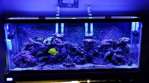current usa orbit marine aquarium led light orbit led storm mode youtube
