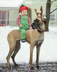 Blind Great Dane 62914f364a328d64f4e0af90bb2f5acc Blue Great Dane Puppies Get