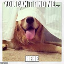 Find Me Memes - you re a really bad hider dog imgflip