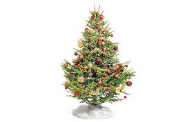 advice on buying your christmas tree telegraph
