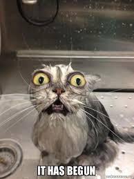 It Has Begun Meme - it has begun cat bath make a meme