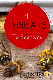 1172 best honey bees buzz u0026 hives images on pinterest bees