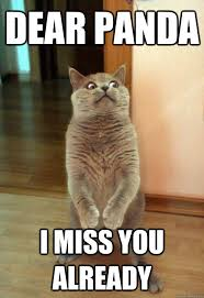 I Miss U Meme - dear panda i miss you already cat meme cat planet cat planet