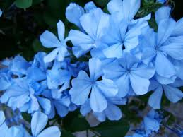 Blue Mood Meaning by Blue Aura Could That Be You Exemplore