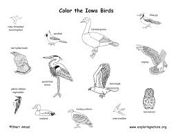 Iowa Birds images Iowa habitats mammals birds amphibians reptiles jpg