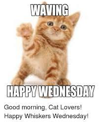 Good Morning Cat Meme - waving happy wednesday good morning cat lovers happy whiskers