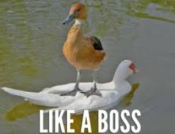 Like A Boss Know Your Meme - image 110885 like a boss know your meme