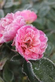 37 best gardening advice images on pinterest gardening tips