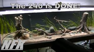 american native plants 240 gallon north american native aquarium youtube