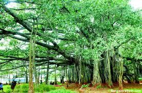 big banyan tree www bangalorebest