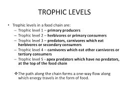 what travels through a food chain or web images 2 1 trophic levels jpg