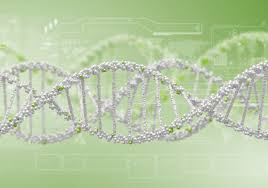 study guide mendels laws of heredity genetics archives interactive biology with leslie samuel