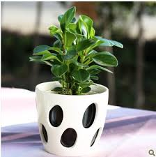 Fragrant Potted Plants - plant merchandiser picture more detailed picture about fragrant