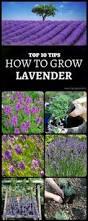 All Year Flowering Shrubs - best shrubs that bloom all year foundation planting flowering