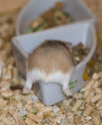 Rodent Meme - hamster butt bowl hamster butts know your meme
