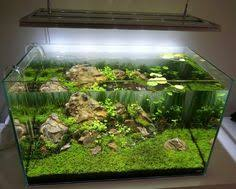 Planted Aquarium Aquascaping Pin By Allison On Tropical Fish Enthusiast Pinterest Tropical Fish