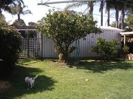 eco friendly backyard