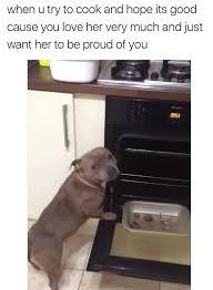 Dog Cooking Meme - wholesome meeeemeees 1
