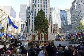 rockefeller center s tree gets prime spot and brings
