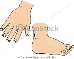 body parts stock photo images 84 104 body parts royalty free