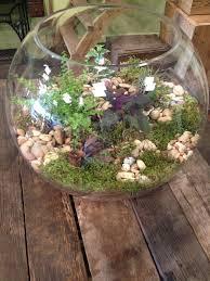 large fish bowl terrarium terrariums pinterest terraria