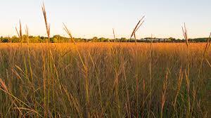 Tropical Savanna Dominant Plants - grasslands