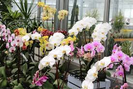 orchids care how to care for orchids and help them bloom new today